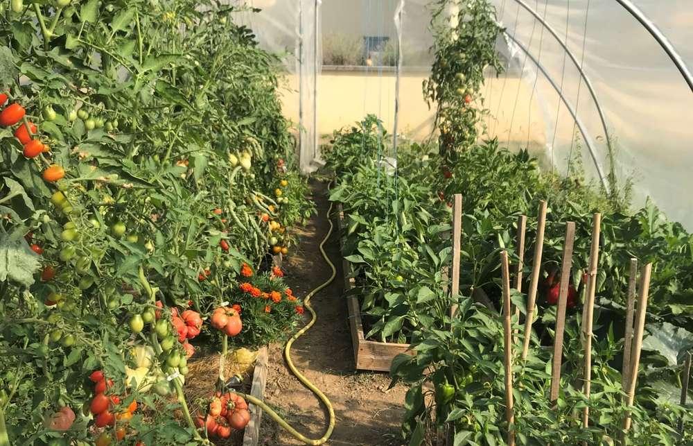 Serre de jardin MINI 4,50m / porte simple - WWW.CASADO-EN ...
